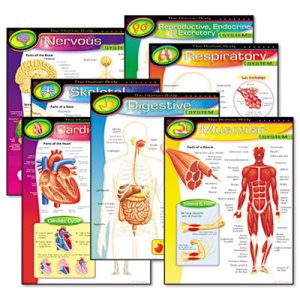 Trend Learning Chart Combo Pack, The Human Body, 17w x 22h, 7/Pack (TEPT38913)